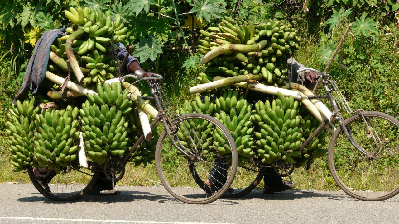 Transport_Bananen